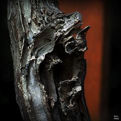 le O, Nature ART