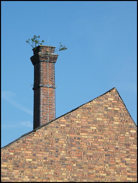 Atherstone chimney tree