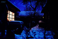 двор в свете луны