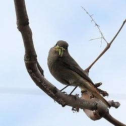 Explored - Hübsches Vögelchen
