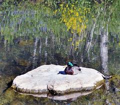"""""""Monet style"""" mallard."""