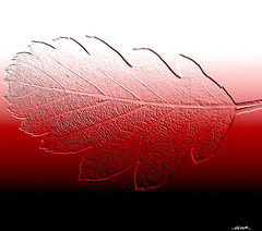 ...leaf in red...