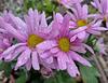 Happy Wet Flower Saturday ; ))