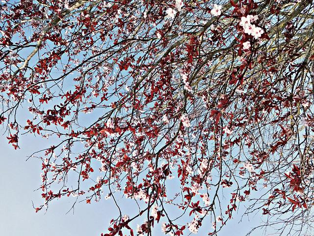 le printemps nous met la tête à l'envers