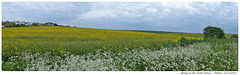 Spring on the South Downs - Denton - 16.5.2018