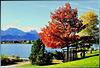 Colourful autumn at Hopfensee. ©UdoSm