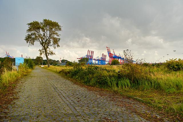 -wegbrache-03388-co-17-09-17