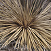 Cactus Burst – Desert Botanical Garden, Papago Park, Phoenix, Arizona