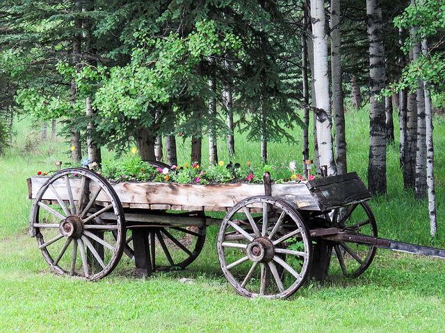 Old wagon with flower display on a rainy day