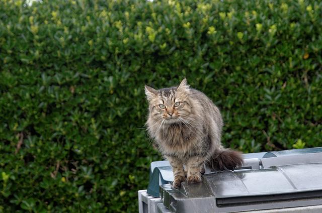 Qui a mis ce beau chat à la poubelle ?