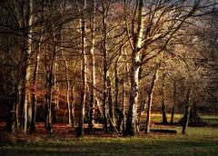 Golden Tones of Winter
