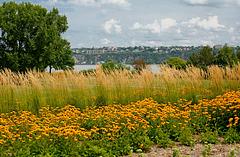 Fleurs près du Bassin Brown-Québec.