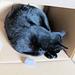 03 cat in a box