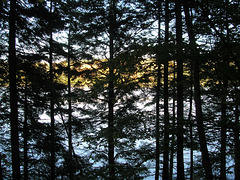 Dark Maine Woods