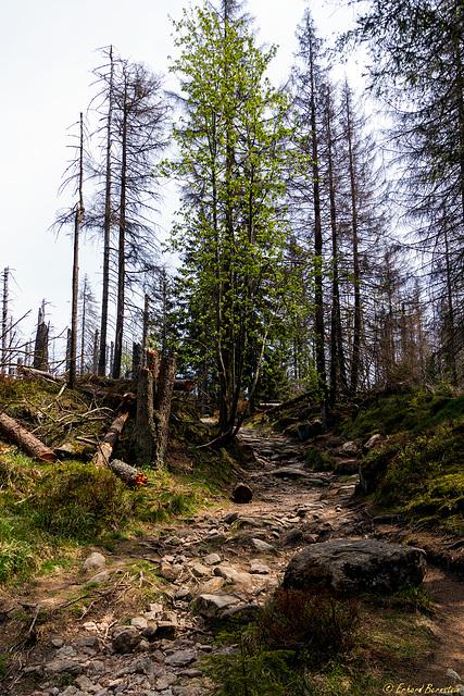 Der Weg zum Achtermann