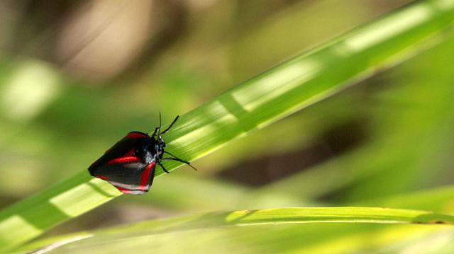 fil(et) à papillons - Page 14 46847758.ed6eb6fa.640
