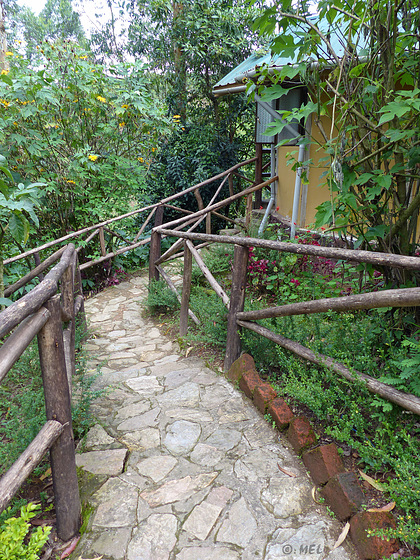 HFF - Dschungelwege