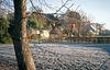 Persimmon in winter