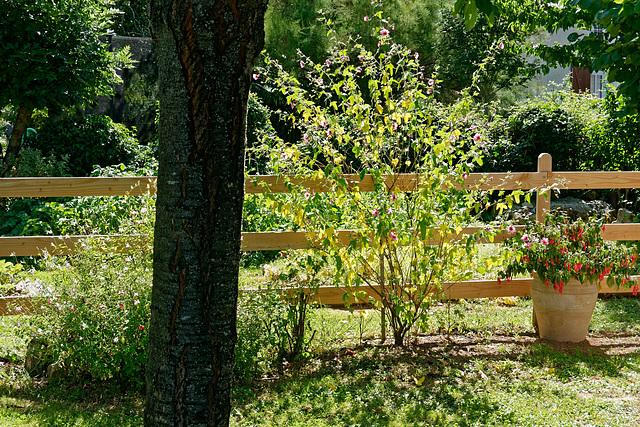 Le jardin ensoleillé