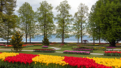 190425 Morges tulipes 1