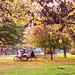 Nel parco tra i colori dell'autunno