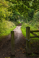 The Wirral Way11