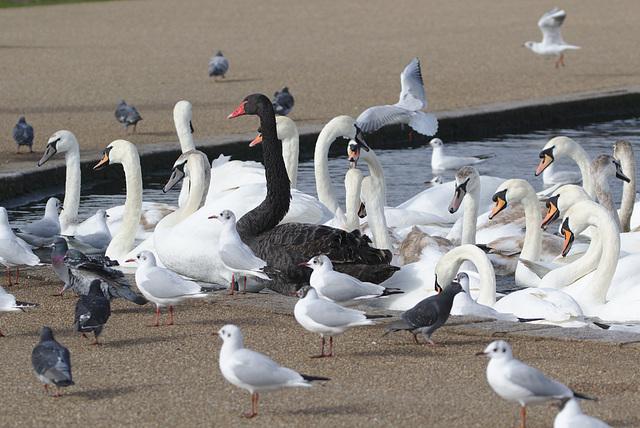 Birds EF7A9796