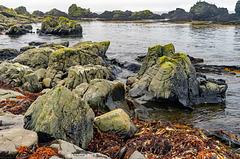 Rock's, Cormorants & a Pip