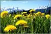 Blick in Richtung Frühjahr... ©UdoSm