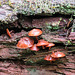 Fungi in the Ghost River forest