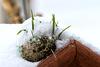 Belebter Meisenknödel im Schnee