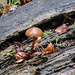 Mushroom, Ghost River forest