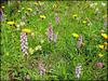 231/365 - Wildblumenwiese