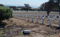 Golden Gate Natl Cemetery  resetting (#0971)