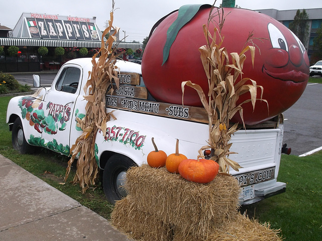 Zappi's pumpkins / Citrouilles Zappi