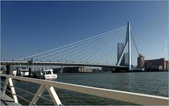 Rotterdam Erasmus Bridge: The Swan...