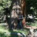 Base of big juniper