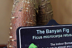 Our Banyan
