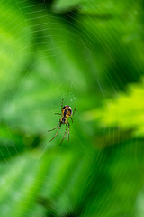 A spider I found along the way