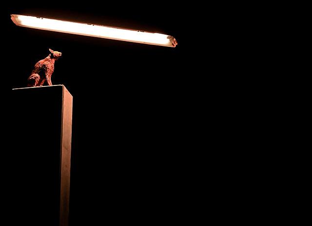 Solarkatze, Begegnung von Tier und Technik - Michael Sailstorfer