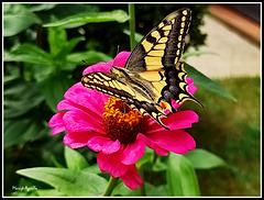 La bella y la flor