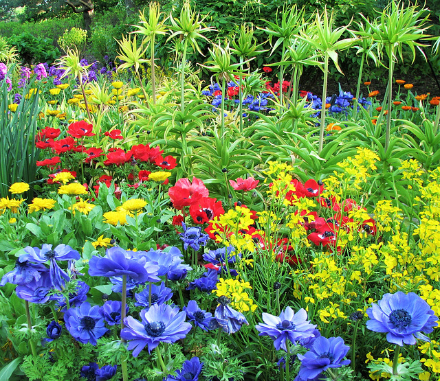 Garden of Many Colors