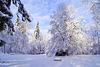 Wintertraumwald