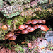 Fungi, Ghost River forest