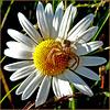 White flower with spider