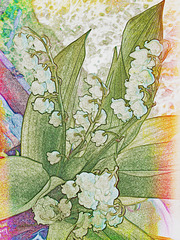 """""""Lily Of The Valley"""""""