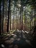 Dappled Shadows at LL Stub Stewart State Park! (+3 insets)