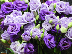 Flowers for Wilfried