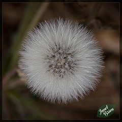 10/366: Seedhead From Above
