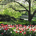 Spring Stroll Through the Garden